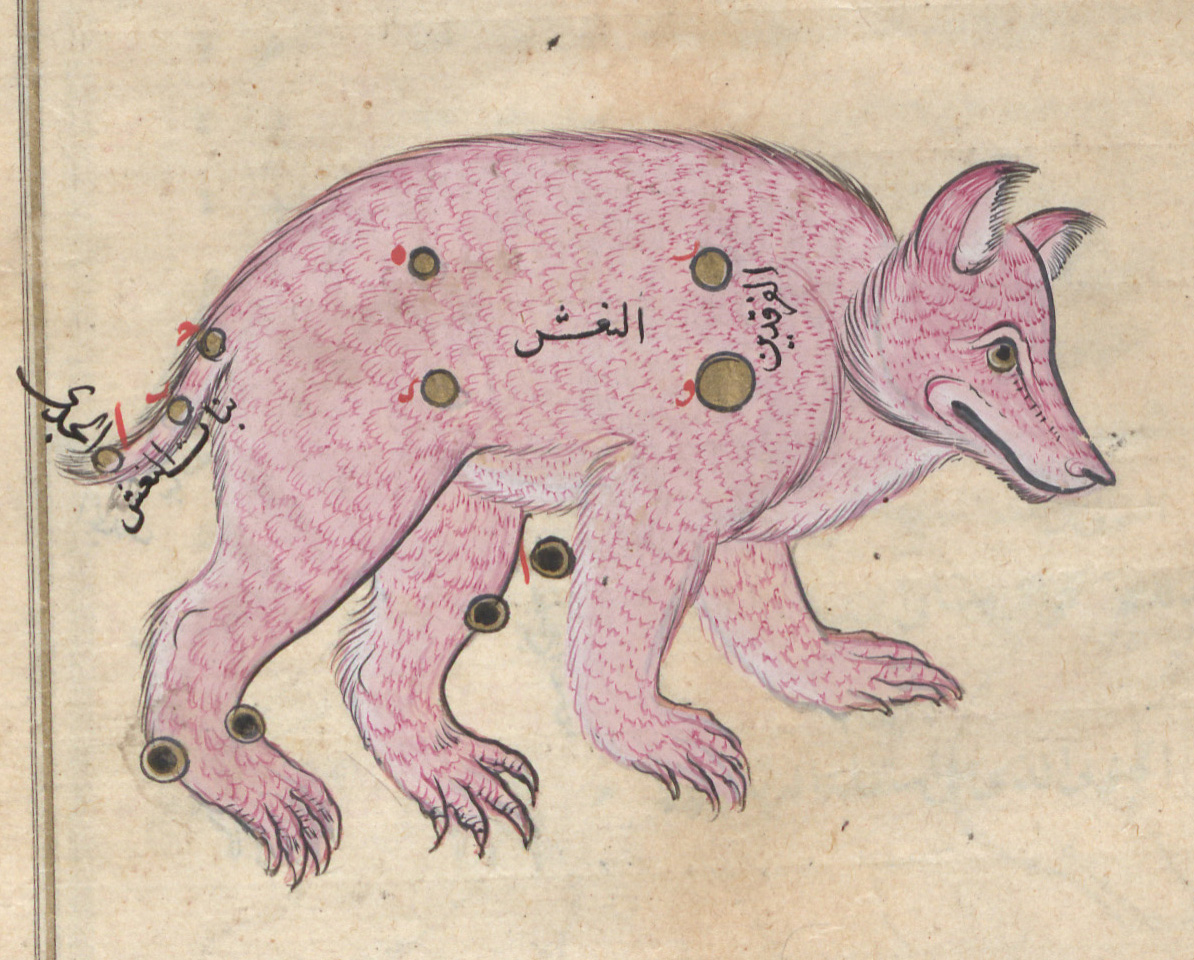 تصویر صورت فلکی دُبّ اصغر از نسخه خطی صورالکواکب عبدالرحمان صوفی#نجوم