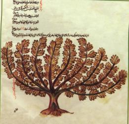 نمایشگاه گیاهان دارویی