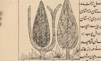 نمایشگاه سروستان؛ نقش سرو در آثار کتابخانه و موزه ملی ملک/ نماهنگ